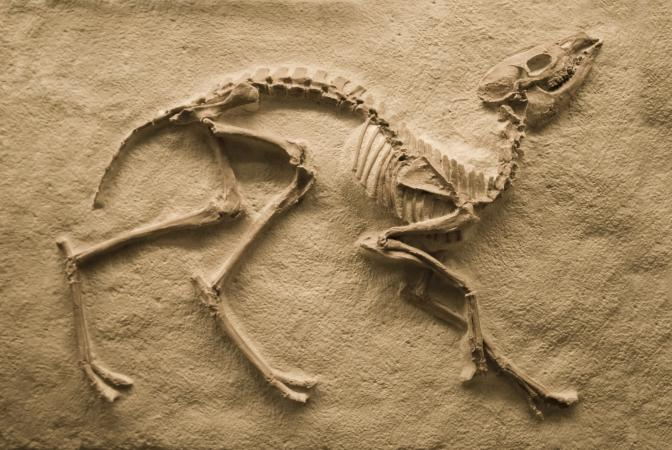206901-672x450-Dinosaur-fossil